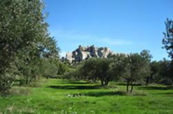 Arles, Les Baux and Saint Remy de Provence from Marseille