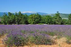 Rhone Valley Wine Tour de Avignon: Chateauneuf-du-Pape, Ventoux y Tavel