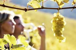 Rhone Valley Wine Tour de Avignon: Chateauneuf-du-Pape y Tavel