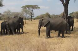 Parque Nacional Tarangire: Excursión guiada de día desde Arusha