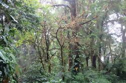 Monteverde Bosque Nuboso de Monteverde