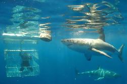Shark Cage Diving Tour de dia inteiro de Cape Town