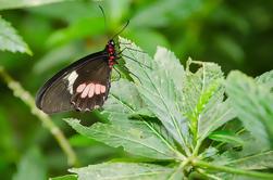 Parque Selvatura Eco Adventure Tour de Monteverde