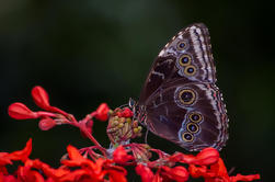 Excursión de jardín de mariposas en Monteverde