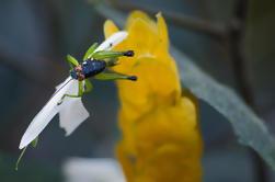 Parque Selvatura Exposición de Insectos en Monteverde