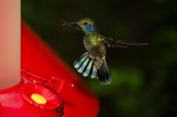 Parque Selvatura: Visita al Museo del Jardín de Colibríes y Insectos