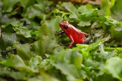 Parque Selvatura: Tour Herpetario en Monteverde