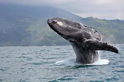 Juneau Shore Excursion: Whale-Watching Ausflug