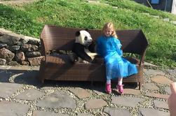 Excursión de un día incluyendo Panda Holding y Alimentación en Dujiangyan Panda Center