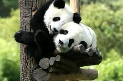 Programa de Voluntarios Privados en el Centro de Rescate Panda de Dujiangyan por un día incluyendo almuerzo