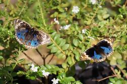 Private Tour: Descoberta Tour de Entopia Butterfly Farm em Penang