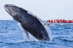 Tour de safari de fotos de observación de ballenas en Los Cabos