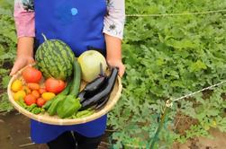Cosecha de verduras de temporada con un granjero japonés local en Tokio
