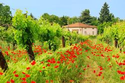 Excursión turística de la Toscana en un día desde Roma