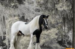 Gypsy Gold Horse Farm Tour