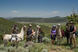 Escursione avventura con il pacchetto Llama Affitti