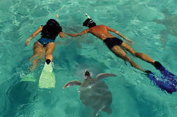 Crucero por delfines y buceo en Isla Lanai desde Maui