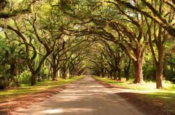 Super Saver de Nueva Orleáns: Paseo por el pantano y el pantano más Tour de plantación de Oak Alley