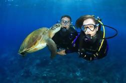 Gold Coast experiencia de buceo en Wave Break Island