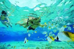Excursión guiada de Snorkel con pescado a la Costa de Oro