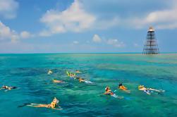 Croisière sur la plongée sous-marine à Key West Reef