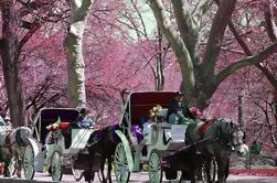 Paseo en carro privado en Central Park