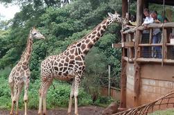 Experiencia fuera de África: Giraffe Centre y Karen Blixen Museum Tour desde Nairobi