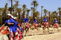 2 horas de paseo en camello en Marrakech
