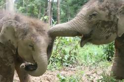 Increíble Kuala Gandah Elephant Sanctuary de Kuala Lumpur