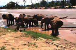 Excursão do Dia do Parque Nacional Kruger de Joanesburgo