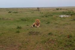 Excursión de un día al Parque Nacional del Lago Nakuru desde Nairobi