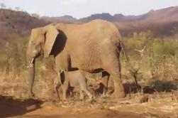 Pilanesberg Game Reserve e Sun City Tour de dia inteiro de Joanesburgo