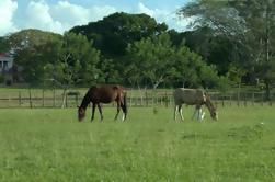 Excursión a caballo por la ciudad de Belice