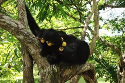 Santuario de Monos Aulladores de Belize City