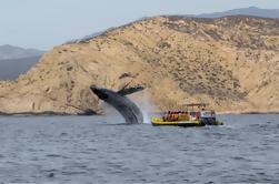 Crucero de observación de ballenas en Cabo San Lucas