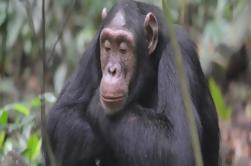 Uganda Parque Nacional del Bosque de Kibale: Excursión guiada de Kampala
