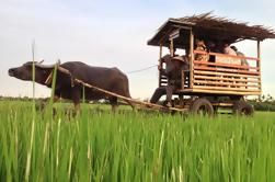 Half-Day Buffalo Cart Day Trip from Hoi An