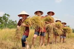 Día de la granja de arroz de medio día