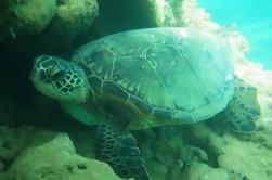 Snorkel SeaFun
