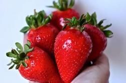 Excursión de un día a Tasmanian Food Discovery y recolección de frutas desde Hobart