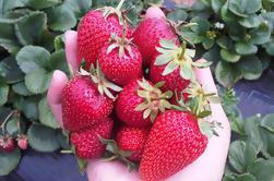 Península de Mornington incluyendo la excursión de día de la granja de la fresa de Melbourne