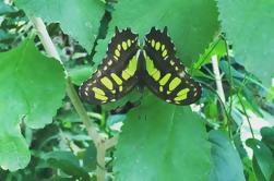 Excursión a los Jardines de Mariposas de Monteverde