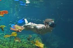 El Jaguar Path Tour: Cenotes, Snorkeling y Zipl