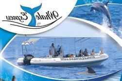 Crucero de observación de ballenas en Tenerife