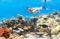 Excursión de un día a la isla de Catalina y snorkeling