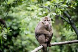 Dia inteiro Matang vida selvagem e trekking em Kubah com almoço de Kuching
