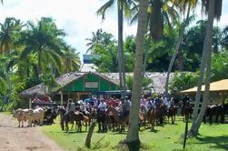 Excursão de um dia a Playa Limon de Punta Cana