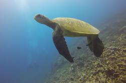 Aloha Nui Snorkel Aventura