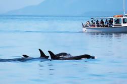 Tour de Observación de Ballenas en las Islas San Juan