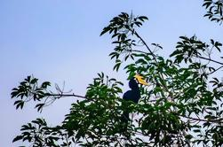 Tour Privado: Bird Watchers Paradise en Phuket